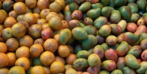 Mangoes from Mexico