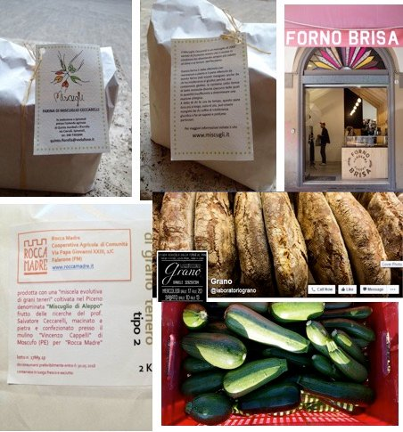 Products made with evolutionary plant breeding